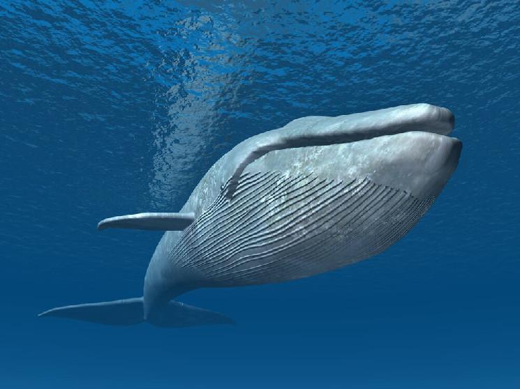 Биткоин-кит совершил крупные переводы в 3600 и 2600 биткоинов