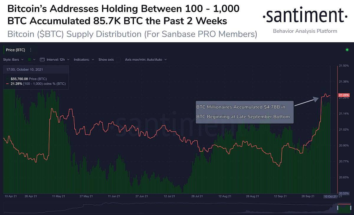 Santiment: с сентября биткоин-киты накопили биткоины на $4,8 млрд